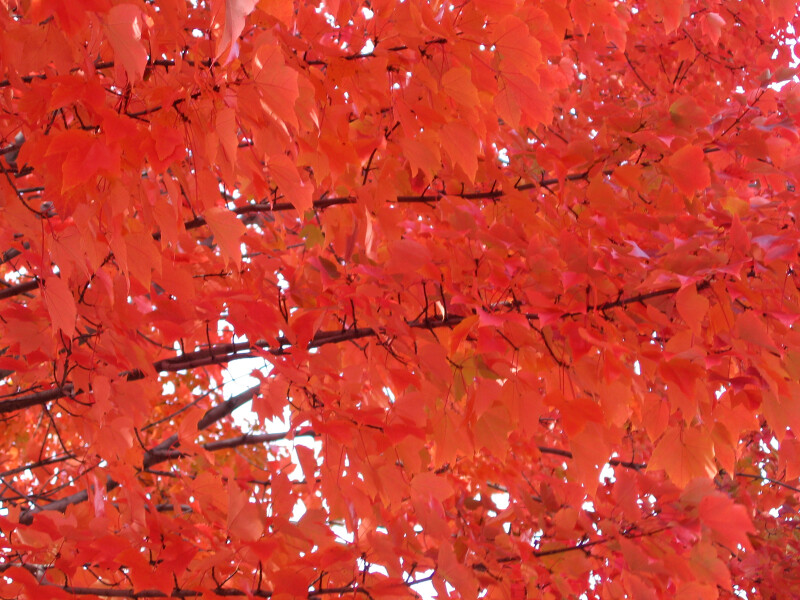 Branches and Orange Leaves