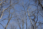 Branches Without Leaves