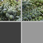 Brassicas photographs