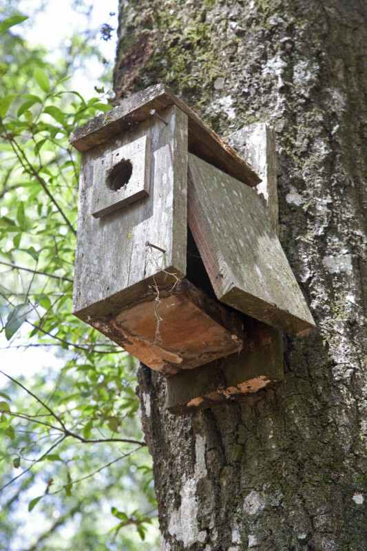 Broken Wooden Birdhouse on a Tree at Chinsegut Wildlife and Environmental Area