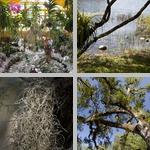 Bromeliads photographs