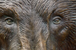 Bronze Bear Face