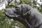 Bronze Dog Statue Close-Up