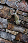 Bronze Frog on Stone Wall
