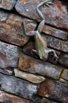 Bronze Frog on Stone Wall