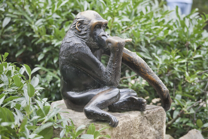Bronze Gorilla Displayed on a Rock at the Artis Royal Zoo