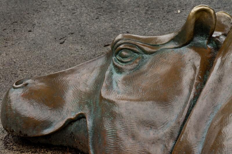 Bronze Hippopotamus Detail