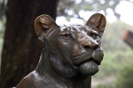 Bronze Lioness Close-Up