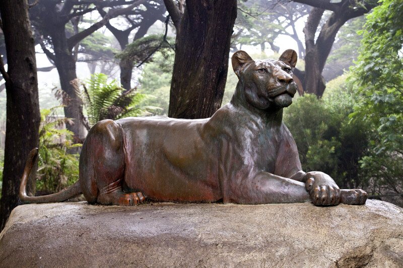 Bronze Lioness on Rock