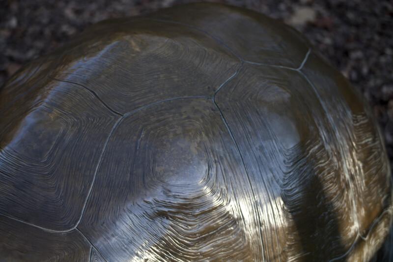 Bronze Tortoise Shell