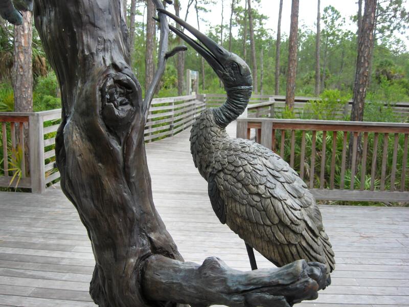 Bronze Wood Stork