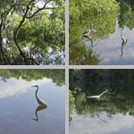 Brooker Creek Preserve photographs
