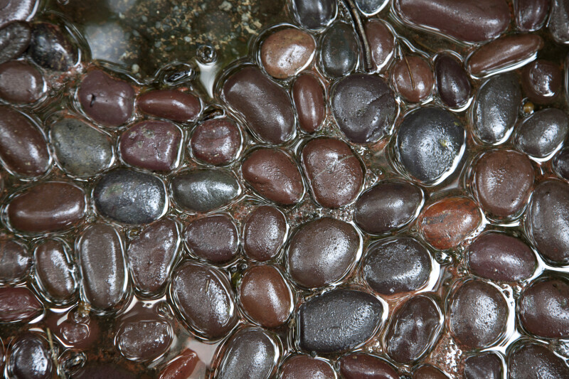 Brown and Grey Stones Floating in Water at the Kanapaha Botanical Gardens