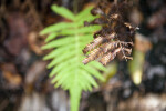 Brown, Dry Fern Leaves