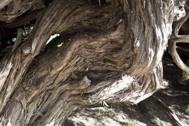 Brown, Gnarled Tree Trunk