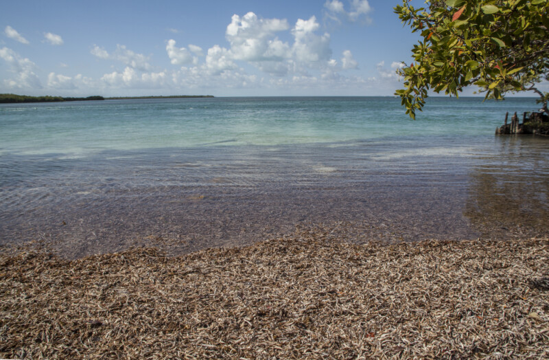 Brown Leaves and Light-Blue Water at Biscayne National Park