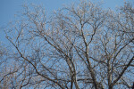 Brown, Nearly Bare Tree Branches