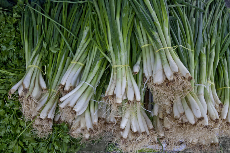 Bundled Scallions on Display
