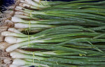 Bundled Scallions