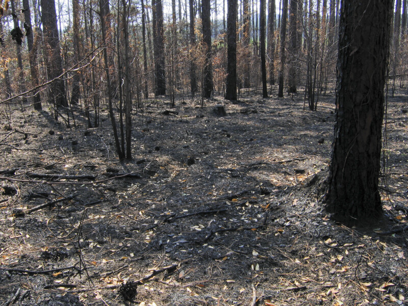 Burned Area