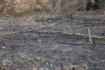 Burned Region at Wildlife and Environmental Area