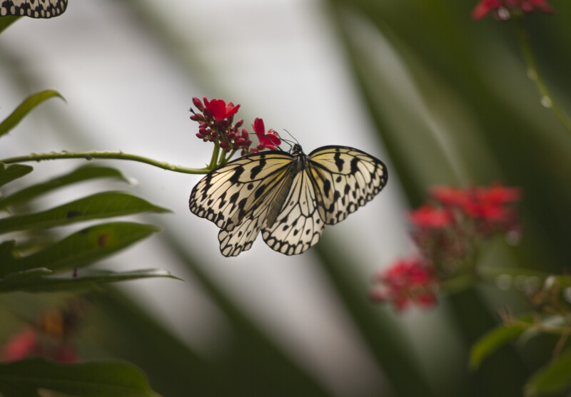 Butterfly Attached to a Flower at the Artis Royal Zoo