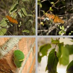 Butterfly Life Cycle photographs