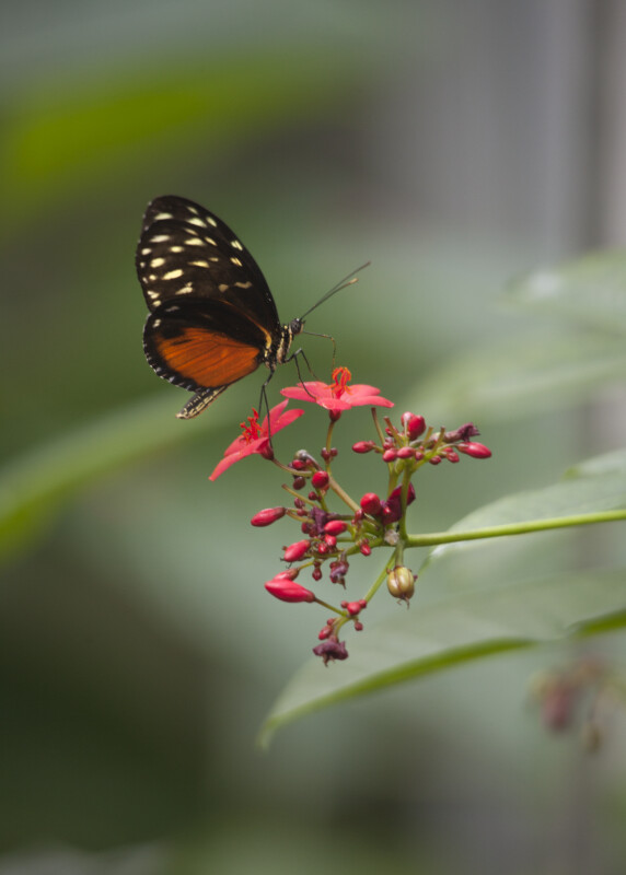 Butterfly on Pink Flowers at the Artis Royal Zoo