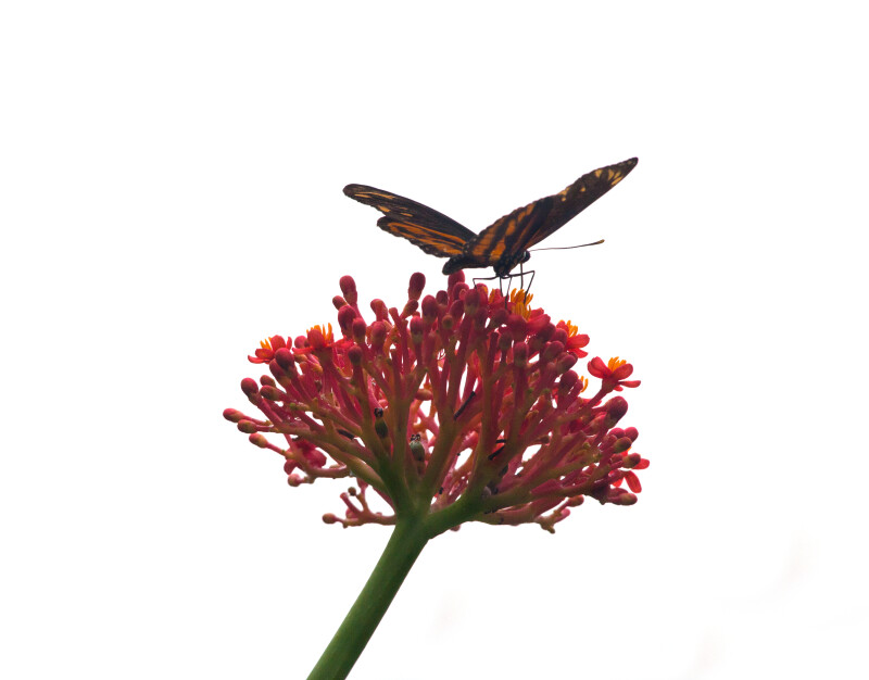 Butterfly Resting on Flower Buds of Plant