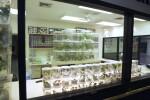 Butterfly World Laboratory