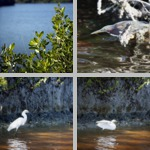 Buttonwood Canal photographs