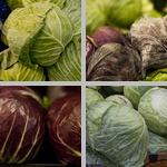 Cabbage photographs
