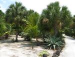 Cactus and Aloe Plant
