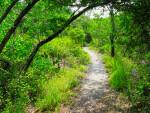 Vegetation by Path