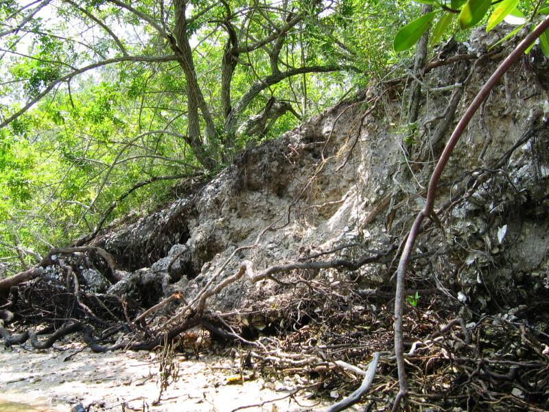 Calusa Mound