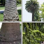 Capitol Park photographs