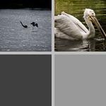 Capturing Prey photographs