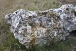 Carbonate Rock at Colt Creek State Park