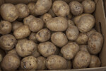 Cardboard Box Full of Potatoes at Haymarket Square