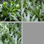Cast Iron Plants photographs