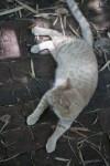 Cat on Path