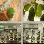 Caterpillars photographs
