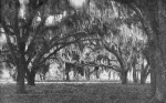 Cathedral Oaks in New Smyrna, Florida