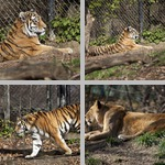 Cats photographs