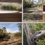 Cedar Key Scrub State Reserve photographs