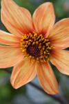 Center of a Flower
