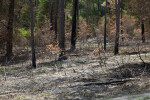 Charred Area at Chinsegut Wildlife and Environmental Area