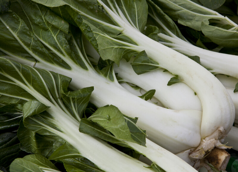 Chinese Cabbage with White Stalks and Green Leaves