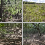Chinsegut Wildlife and Environmental Area photographs
