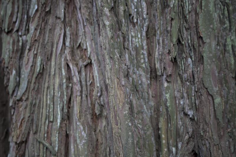 Chipped Redwood Bark